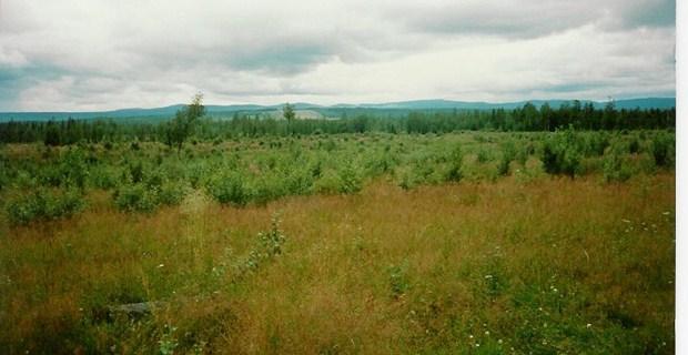 Natur_Västerhusa