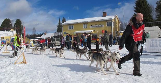 Vintermarknad_hundspann
